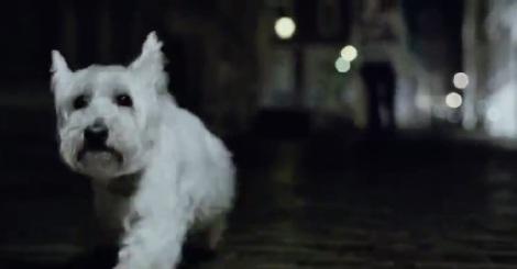 1_chasingdog